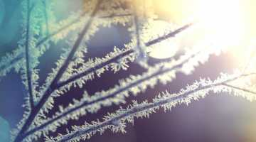 frost_750x420