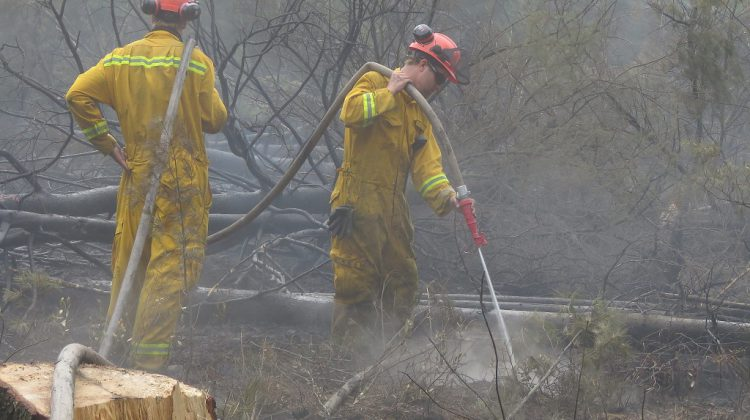 Photo of the Ellice Swamp fire contributed by the UTRCA